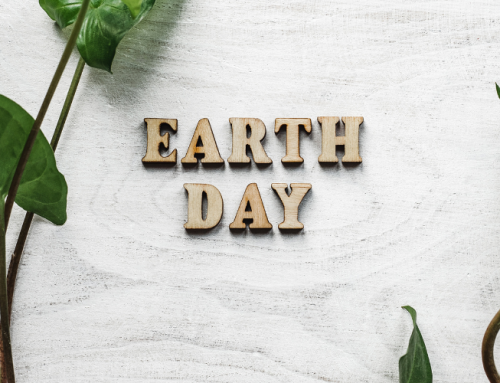 Celebrate Earth Day: Simple Changes To Achieve Sustainability